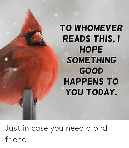 Good, Today, and Friend: TO WHOMEVER  READS THIS, I  НОРЕ  SOMETHING  GOOD  HAPPENS TO  YOU TODAY. Just in case you need a bird friend.
