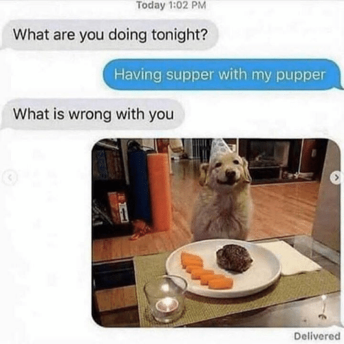 pupper: Today 1:02 PM  What are you doing tonight?  Having supper with my pupper  What is wrong with you  Delivered