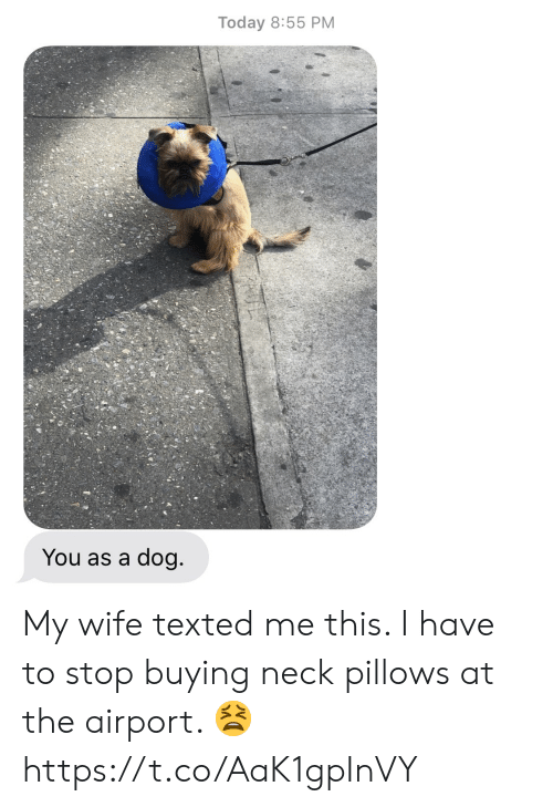 pillows: Today 8:55 PM  You as a dog My wife texted me this.  I have to stop buying neck pillows at the airport. 😫 https://t.co/AaK1gpInVY