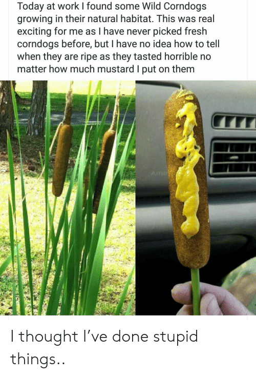 Fresh, Work, and How To: Today at work found some Wild Corndogs  growing in their natural habitat. This was real  exciting for me as I have never picked fresh  corndogs before, but I have no idea how to tell  when they are ripe as they tasted horrible no  matter how much mustard I put on them  AIR I thought I've done stupid things..