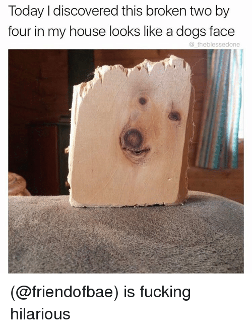 Dog Faces: Today I discovered this broken two by  four in my house looks like a dogs face  theblessedone (@friendofbae) is fucking hilarious