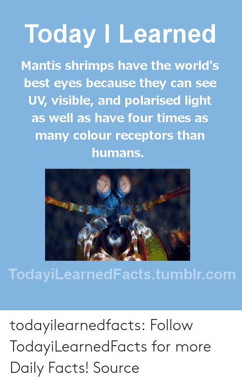 Facts, News, and Tumblr: Today I Learned  Mantis shrimps have the world's  best eyes because they can see  V, visible, and polarised light  as well as have four times as  many colour receptors than  humans.  TodaviLearned Facts.tumblr.com todayilearnedfacts: Follow TodayiLearnedFacts for more Daily Facts! Source