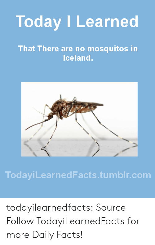 mosquitos: Today I Learned  That There are no mosquitos in  Iceland.  TodaviLearned Facts.tumblr.com todayilearnedfacts: Source Follow TodayiLearnedFacts for more Daily Facts!