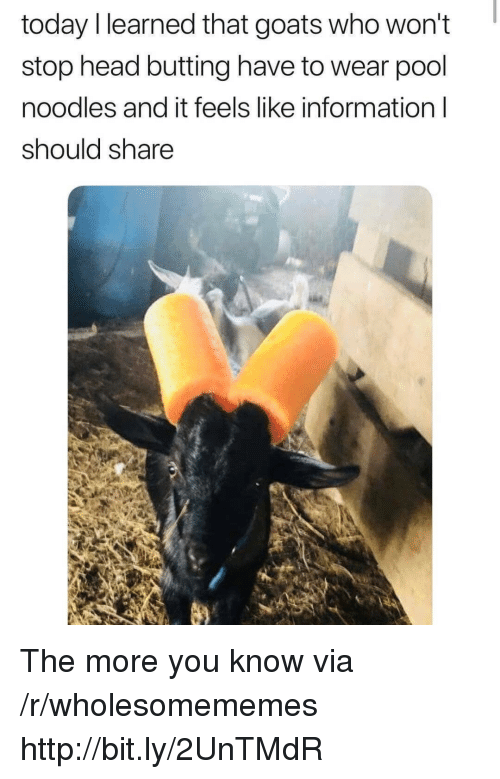 Head, The More You Know, and Http: today l learned that goats who won't  stop head butting have to wear pool  noodles and it feels like information l  should share The more you know via /r/wholesomememes http://bit.ly/2UnTMdR