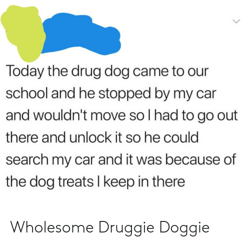 School, Search, and Today: Today the drug dog came to our  school and he stopped by my car  and wouldn't move so I had to go out  there and unlock it so he could  search my car and it was because of  the dog treats I keep in there Wholesome Druggie Doggie