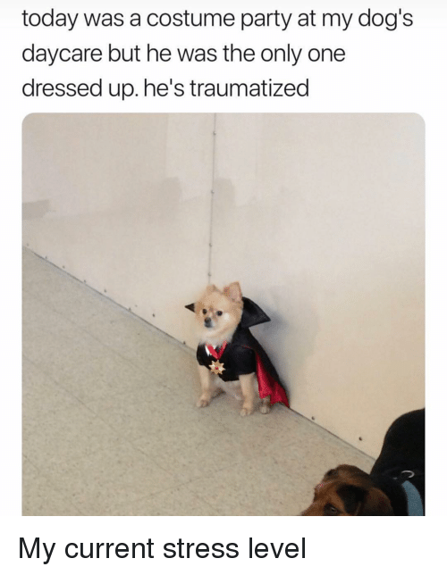 Dogs, Party, and Today: today was a costume party at my dog's  daycare but he was the only one  dressed up. he's traumatized My current stress level