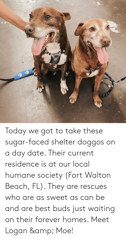 Beach, Best, and Date: Today we got to take these sugar-faced shelter doggos on a day date. Their current residence is at our local humane society (Fort Walton Beach, FL). They are rescues who are as sweet as can be and are best buds just waiting on their forever homes. Meet Logan & Moe!