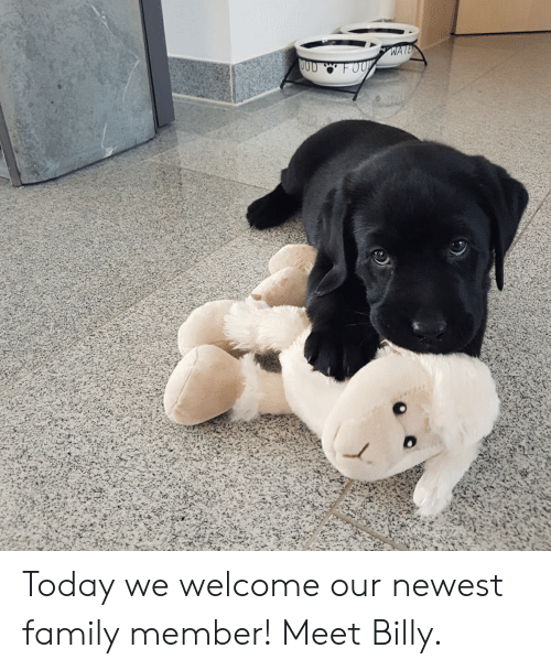 Family, Puppy, and Today: Today we welcome our newest family member! Meet Billy.