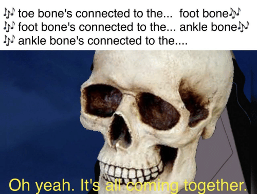 oh yeah: toe bone's connected to the... foot bonelN  foot bone's connected to the... ankle bone j  ankle bone's connected to the....  Oh yeah. It's all.com/mg/together.