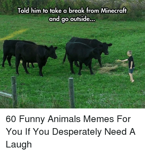 Animals Memes: Told him to take a break from Minecraft  and go outside... 60 Funny Animals Memes For You If You Desperately Need A Laugh
