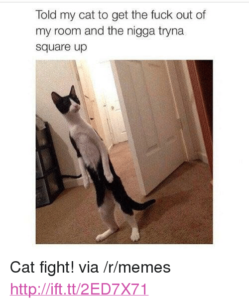 """Out Of My Room: Told my cat to get the fuck out of  my room and the nigga tryna  square up <p>Cat fight! via /r/memes <a href=""""http://ift.tt/2ED7X71"""">http://ift.tt/2ED7X71</a></p>"""