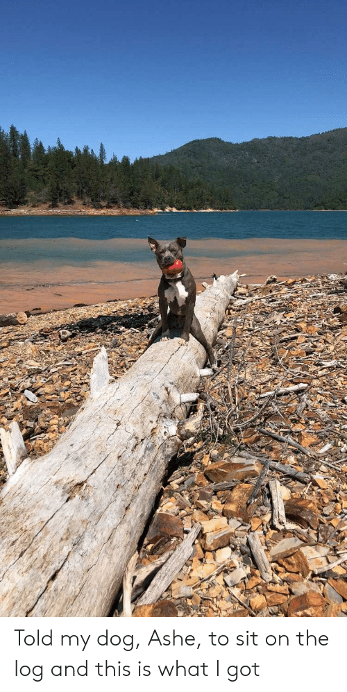 Ashe: Told my dog, Ashe, to sit on the log and this is what I got