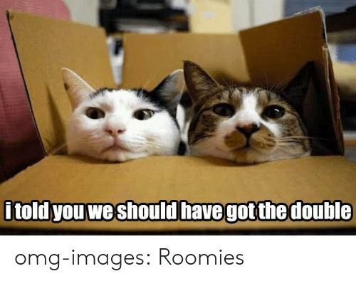 roomies: told you we should have got the double omg-images:  Roomies