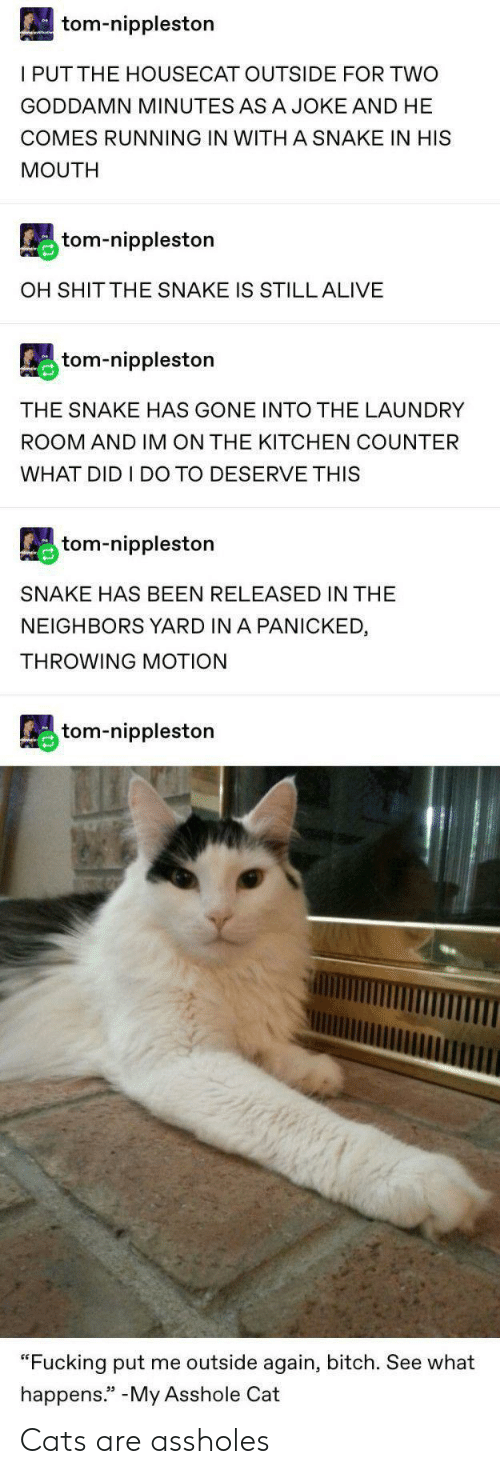 "panicked: tom-nippleston  I PUTTHE HOUSECAT OUTSIDE FOR TWO  GODDAMN MINUTES ASA JOKE AND HE  COMES RUNNING IN WITH A SNAKE IN HIS  MOUTH  tom-nippleston  OH SHIT THE SNAKE IS STILL ALIVE  tom-nippleston  THE SNAKE HAS GONE INTO THE LAUNDRY  ROOM AND IM ON THE KITCHEN COUNTER  WHAT DID I DO TO DESERVE THIS  tom-nippleston  SNAKE HAS BEEN RELEASED IN THE  NEIGHBORS YARD IN A PANICKED  THROWING MOTION  tom-nippleston  ""Fucking put me outside again, bitch. See what  happens."" -My Asshole Cat Cats are assholes"