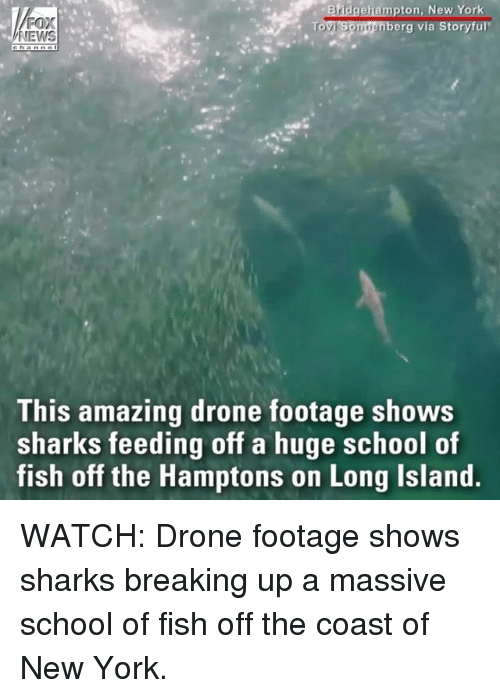 Islander: ton, New Yor  erg via Storyful  NEWS  This amazing drone footage shows  sharks feeding off a huge school of  fish off the Hamptons on Long Island WATCH: Drone footage shows sharks breaking up a massive school of fish off the coast of New York.