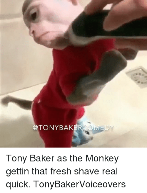 Bakerate: @TONYBAKER Tony Baker as the Monkey gettin that fresh shave real quick. TonyBakerVoiceovers