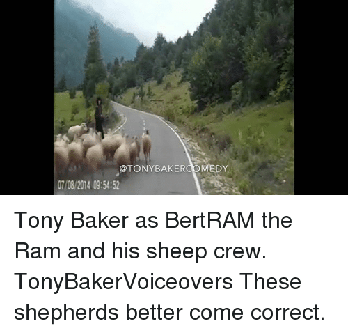 Bakerate: @TONYBAKERCOMEDY  07/08/2014 09:54:52 Tony Baker as BertRAM the Ram and his sheep crew. TonyBakerVoiceovers These shepherds better come correct.