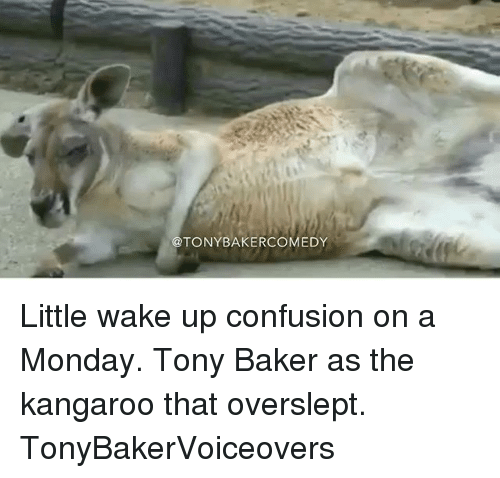 Bakerate: @TONYBAKERCOMEDY Little wake up confusion on a Monday. Tony Baker as the kangaroo that overslept. TonyBakerVoiceovers