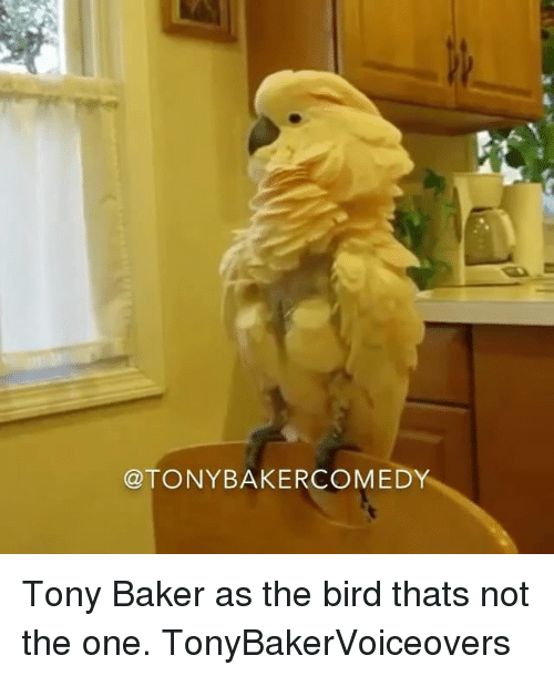 Bakerate: @TONYBAKERCOMEDY Tony Baker as the bird thats not the one. TonyBakerVoiceovers