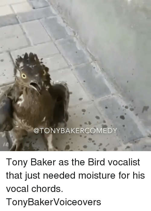 Bakerate: @TONYBAKERCOMEDY Tony Baker as the Bird vocalist that just needed moisture for his vocal chords. TonyBakerVoiceovers
