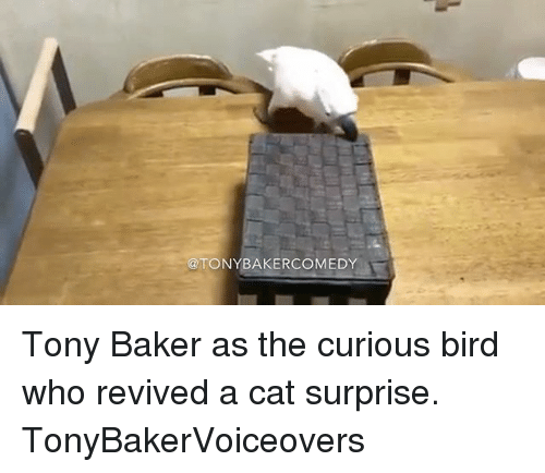 Bakerate: @TONYBAKERCOMEDY Tony Baker as the curious bird who revived a cat surprise. TonyBakerVoiceovers