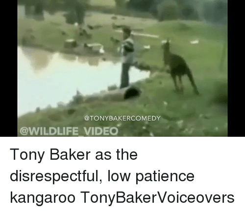 Bakerate: @TONYBAKERCOMEDY  @WILDLIFE VIDEO Tony Baker as the disrespectful, low patience kangaroo TonyBakerVoiceovers