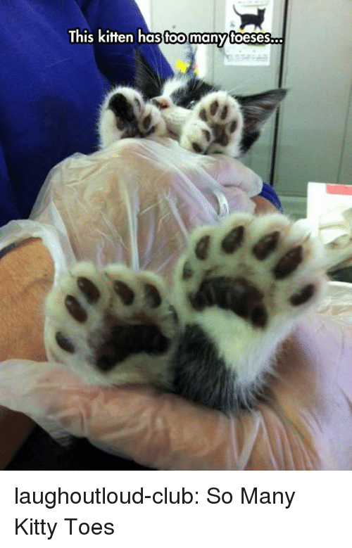 Club, Tumblr, and Blog: toomany  This Kifen hasfoomanyfoeses... laughoutloud-club:  So Many Kitty Toes