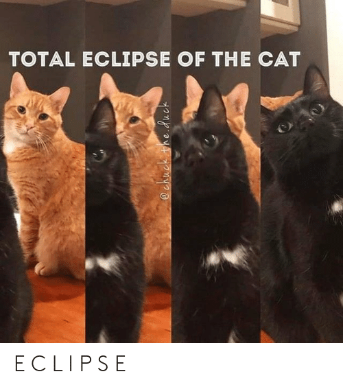 Memes, Eclipse, and 🤖: TOTAL ECLIPSE OF THE CAT  @chuck the.duc E C L I P S E
