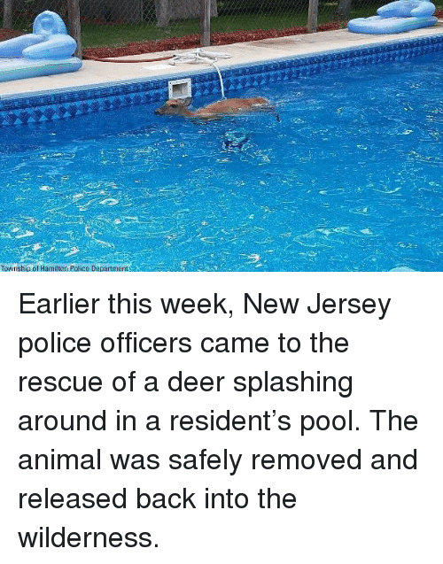 township: Township of Hamilton Police Department Earlier this week, New Jersey police officers came to the rescue of a deer splashing around in a resident's pool. The animal was safely removed and released back into the wilderness.