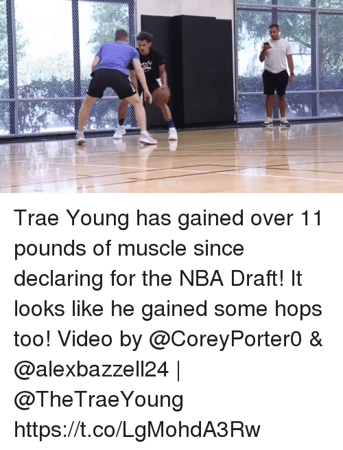 Nba Draft: Trae Young has gained over 11 pounds of muscle since declaring for the NBA Draft! It looks like he gained some hops too!  Video by @CoreyPorter0 & @alexbazzell24 | @TheTraeYoung https://t.co/LgMohdA3Rw