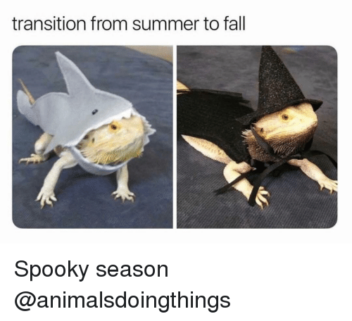 Fall, Summer, and Dank Memes: transition from summer to fall Spooky season @animalsdoingthings