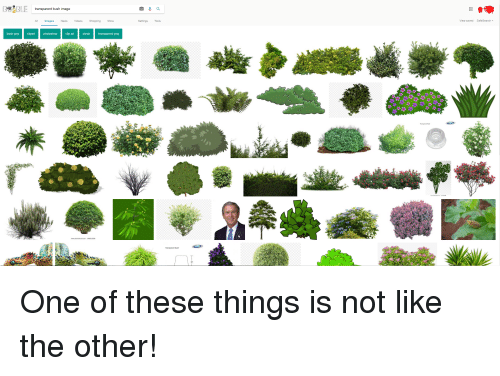 transparent png: transparent bush image  All Images News Videos Shopping More  Settings Tools  View saved  SafeSearch ▼  bush png  clipart photoshop  clip art  shrub  transparent png  21