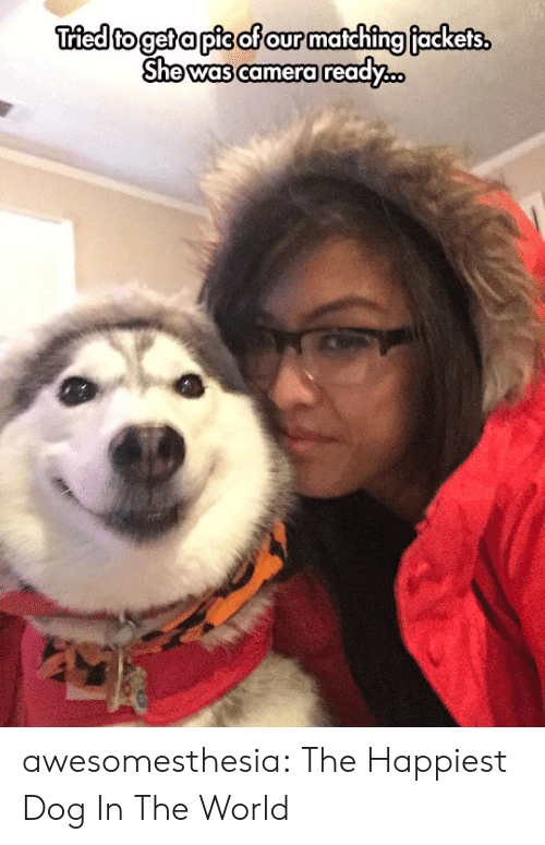Tumblr, Blog, and Camera: Tried to get a pis of our matching fackets.  She was camera ready.. awesomesthesia:  The Happiest Dog In The World