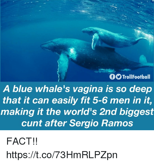 sergio ramos: TrollFootball  A blue whale's vagina is so deep  that it can easily fit 5-6 men in it,  making it the world's 2nd biggest  cunt after Sergio Ramos FACT!! https://t.co/73HmRLPZpn