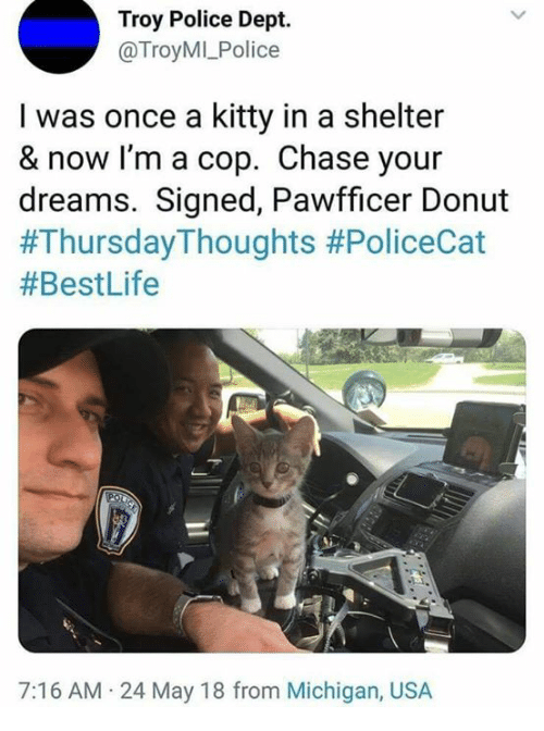 Memes, Police, and Chase: Troy Police Dept.  @TroyMI_Police  I was once a kitty in a shelter  & now I'm a cop. Chase your  dreams. Signed, Pawfficer Donut  #ThursdayThoughts #PoliceCat  #BestLife  7:16 AM.24 May 18 from Michigan, USA