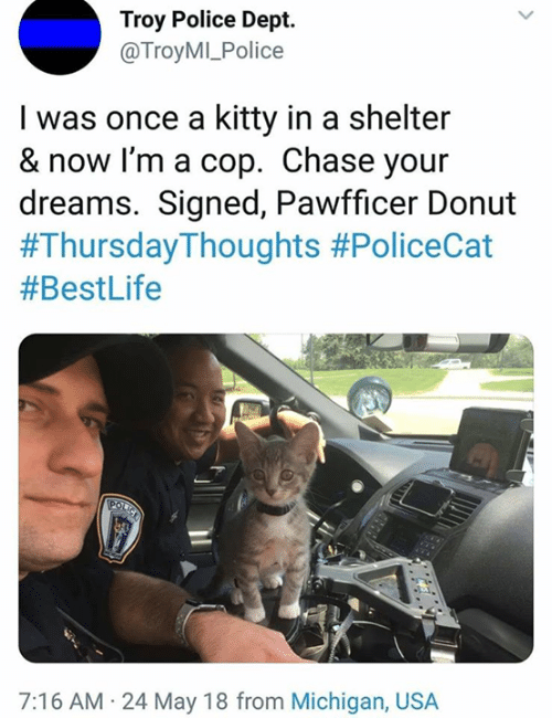 troy: Troy Police Dept.  @TroyMI_Police  I was once a kitty in a shelter  & now I'm a cop. Chase your  dreams. Signed, Pawfficer Donut  #Thursday-Thoughts #PoliceCat  #BestLife  7:16 AM 24 May 18 from Michigan, USA