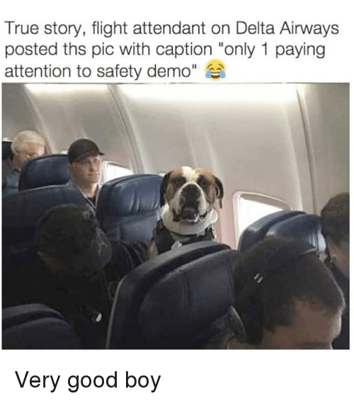 """Delta: True story, flight attendant on Delta Airways  posted ths pic with caption """"only 1 paying  attention to safety demo"""" Very good boy"""