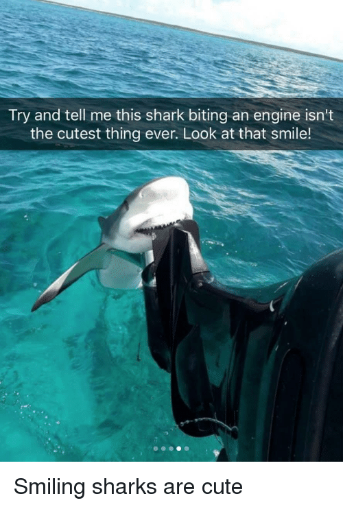 Cute, Shark, and Sharks: Try and tell me this shark biting an engine isn't  the cutest thing ever. Look at that smile! Smiling sharks are cute