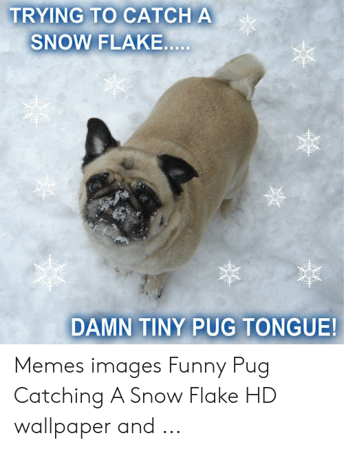 Funny, Memes, and Images: TRYING TO CATCH A  SNOW FLAKE  DAMN TINY PUG TONGUE! Memes images Funny Pug Catching A Snow Flake HD wallpaper and ...
