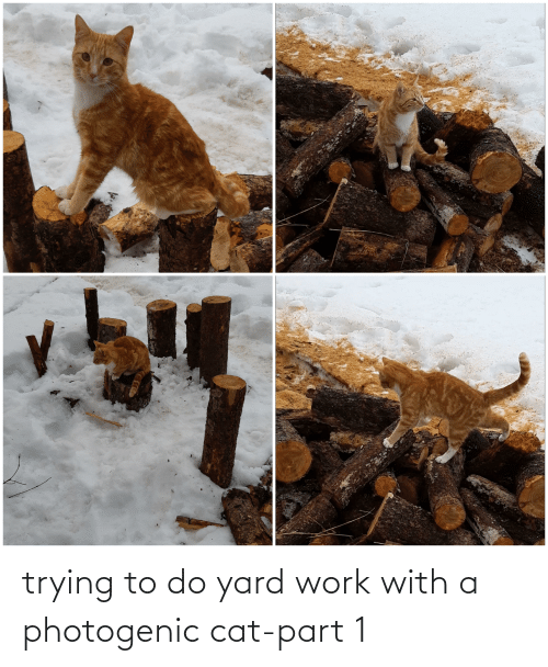 Trying To Do: trying to do yard work with a photogenic cat-part 1