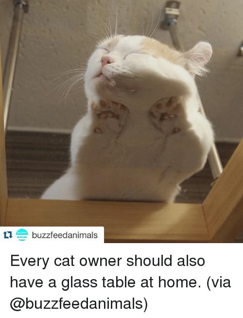 Tu Buzzfeed Animals Every Cat Owner Should Also Have A Glass Table