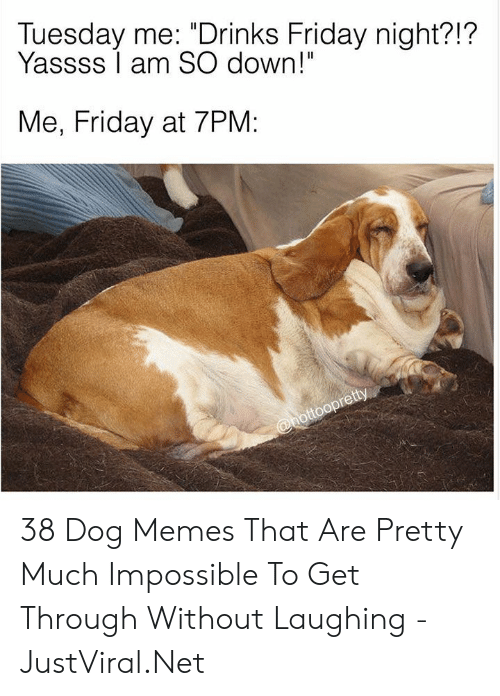 "Dog Memes: Tuesday me: ""Drinks Friday night?!?  Yassss I am SO down!""  Me, Friday at 7PM:  @hottoopretty 38 Dog Memes That Are Pretty Much Impossible To Get Through Without Laughing - JustViral.Net"