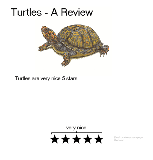 Dank, Stars, and Nice: Turtles - A Review  Turtles are very nice 5 stars  very nice  @welcometomymemepage  @wtmmp