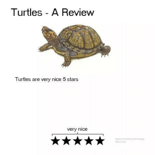 Stars, Nice, and Turtles: Turtles A Review  Turtles are very nice 5 stars  very nice  wtometamng