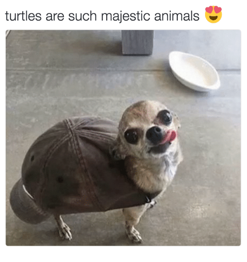 Majestic Animals: turtles are such majestic animals