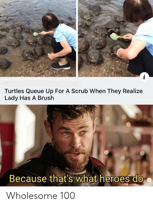 turtles: Turtles Queue Up For A Scrub When They Realize  Lady Has A Brush  Because that's what heroes do Wholesome 100