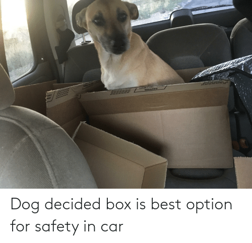 Tix: TUX TIX TR TK TUX N X  TEX TIX TEX TX TUX TAX TOR  CAUTION Dog decided box is best option for safety in car