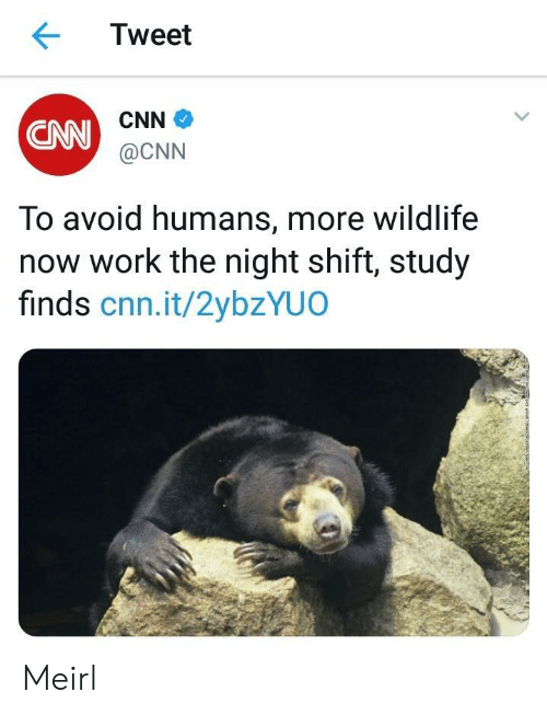 night shift: Tweet  CNN  CNN  @CNN  To avoid humans, more wildlife  now work the night shift, study  finds cnn.it/2ybzYUO Meirl