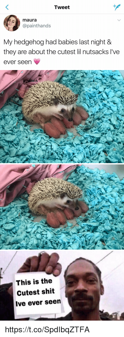 Seens: Tweet  maura  @painthands  My hedgehog had babies last night &  they are about the cutest lil nutsacks l've  ever seen   This is the  Cutest shit  Ive ever seen https://t.co/SpdIbqZTFA
