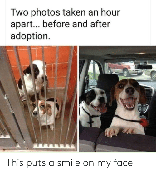 Taken, Smile, and Photos: Two photos taken an hour  apar... before and after  adoption This puts a smile on my face